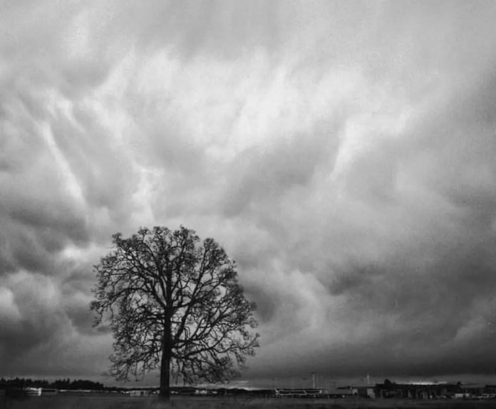 Tree Storm Clouds