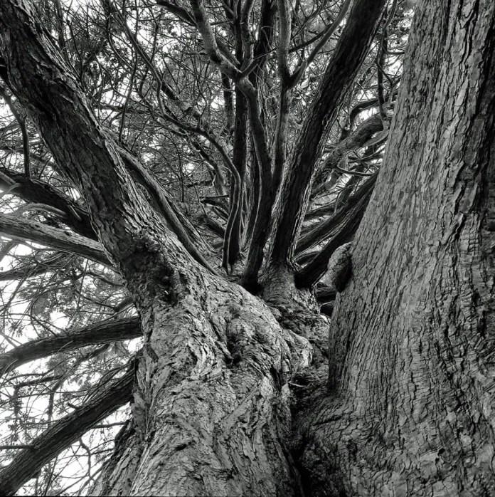 Choices Tree