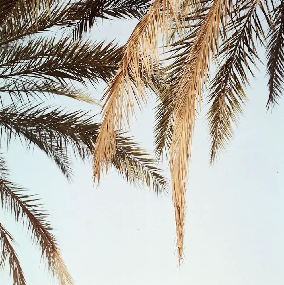 """""""Fronds"""" - Hasselblad 500CM / Zeiss 80mm Planar / Lomography Colour Negative 400"""