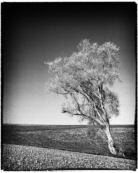 Lonesome tree - Mamiya RB67, Kodak Tri-X 400