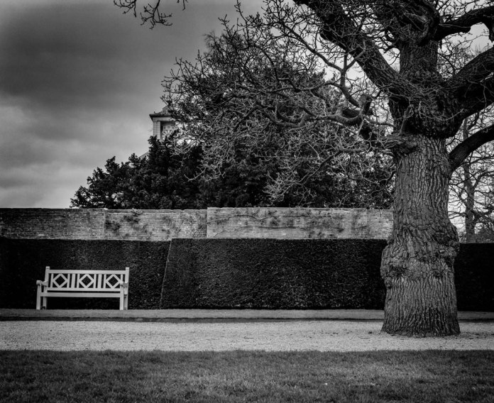 Mamiya RB67 - Path vs tree - Ilford HP5+