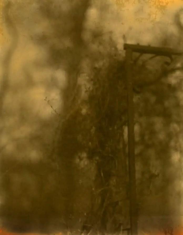 Arbor - Contact Printed Sun Print - John Nanian