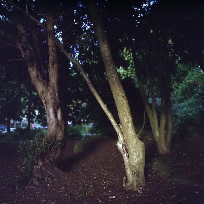 Natural Light - Hasselblad 500C-M - Zeiss Distagon CF 60mm f-3.5 - Kodak Portra 400 - Epson 4180
