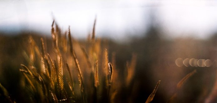 Oregon Sunset - Kodak Portra 400VC shot at EI 320 - Color negative film in 120 format shot as 6x12. Graflex Speed Graphic - Kodak Aero Ektar 178mm f2.5 - 6x12 film back.