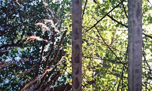 Barred skies – Kodak Portra 400 (120)