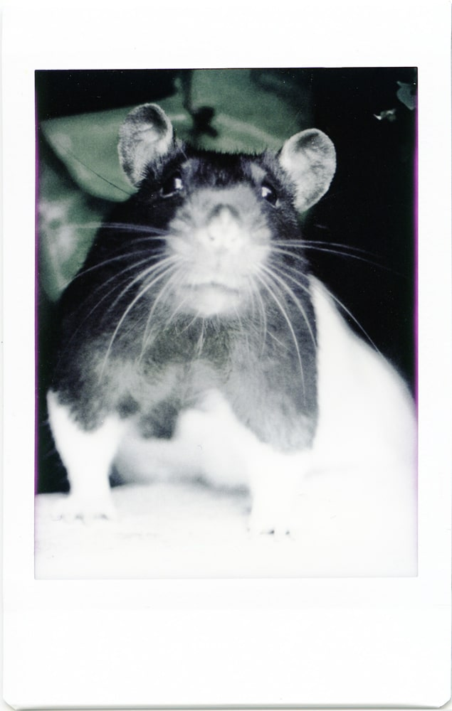 Instax Mini Monochrome - Colour Cast Rat