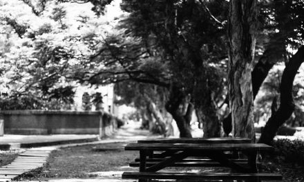 Bench – Ilford Delta 400 Professional (120)