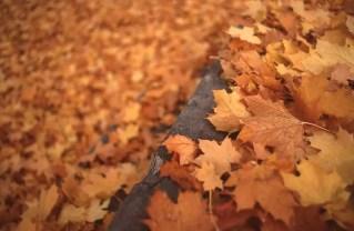 Kalispell in October