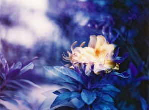 Drunk - Lomochrome Purple XR 100-400 shot at EI 50. Color negative film in 120 format shot as 6x6.