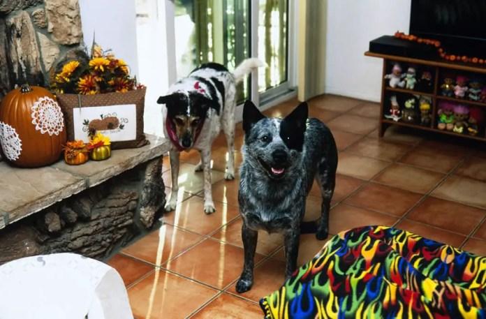 Happy Dogs, Canon Elan 7, 50mm 1.8STM, Fuji Velvia 50