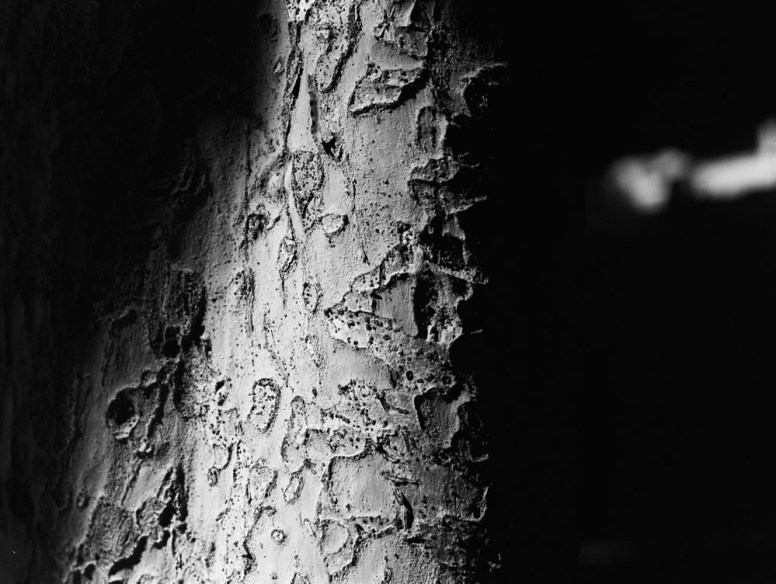 Scarred - ILFORD HP5 PLUS shot at EI 1000. Black and white negative film in 120 format. shot as 6x4.5. Push processed 1+1/3 stops.