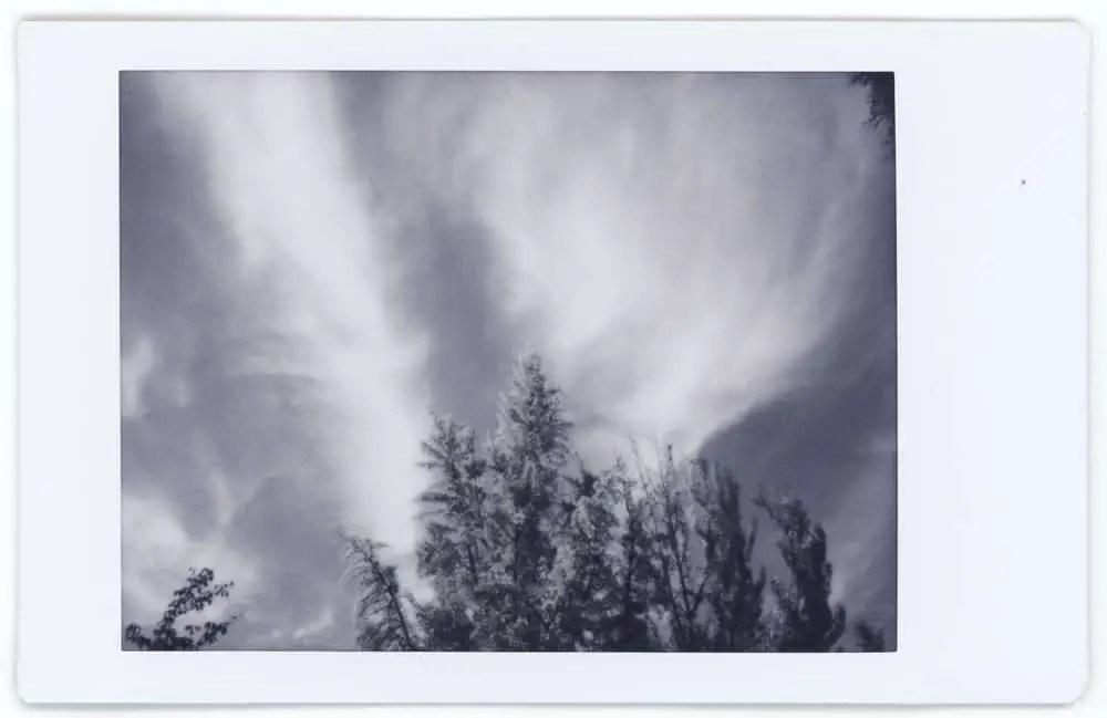 Photographer: Jonathan Potter Award: Best use of color Title: Fall Leaves Location: Portland, Oregon, USA Camera: Fuji Mini 90 NEO CLASSIC