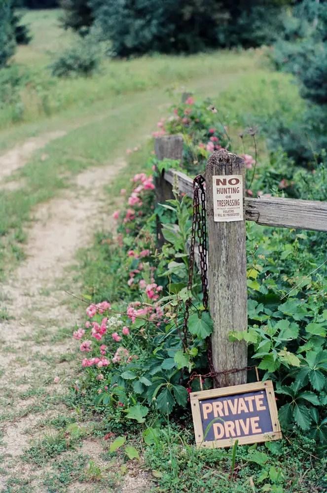 Wild roses, Kodak Portra, Pentax K1000