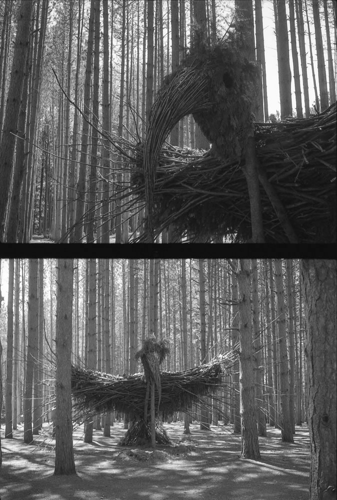 Forest bird, Olympus Pen EE3 Ilford HP5+, western Michigan