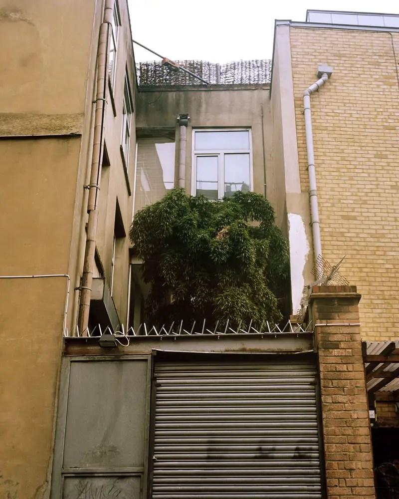 Courtyard Tree, Kodak Portra 400, Rolleiflex T, Hoxton