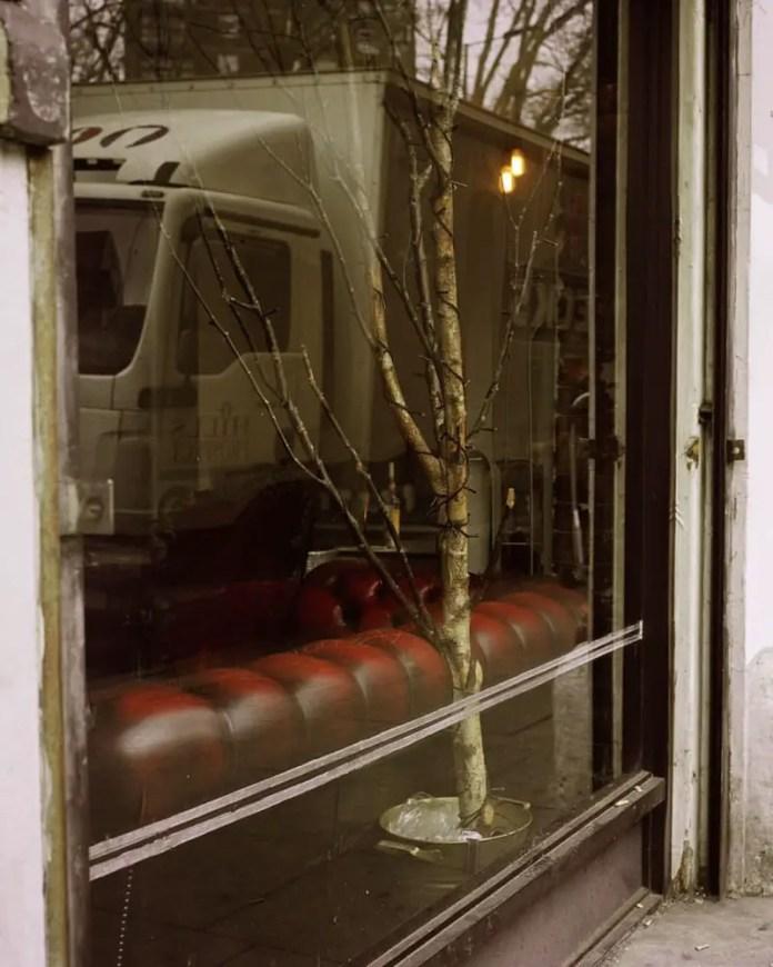 Fairy Lights on a Tree Kodak Portra 400, Rolleiflex T, Shoreditch