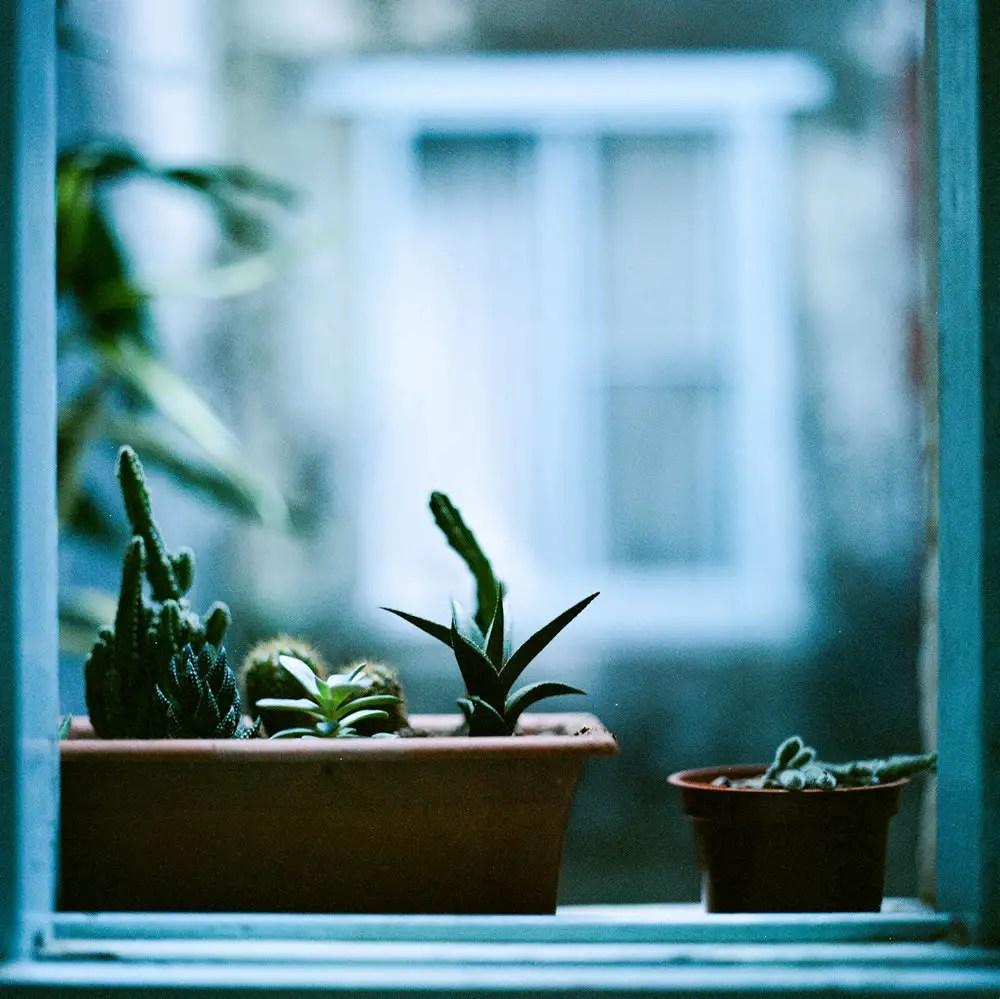 Succulent display Shot on Kodak Portra 400VC at EI 200. Color negative film in 120 format shot as 6x6.