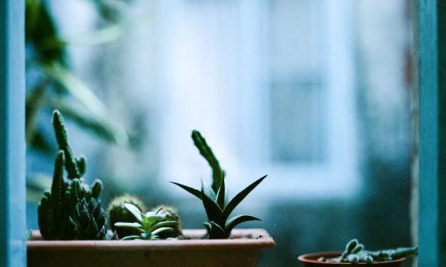 Succulent display – Shot on Kodak Portra 400VC at EI 200 (120 format)