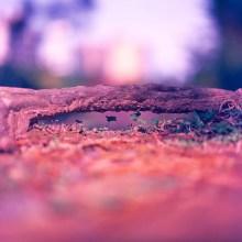 Ant bridge - Shot on Kodak EKTACHROME 100VS at EI 200. Color reversal (slide) film in 120 format shot as 6x6. Push processed 1-stop, cross processed.