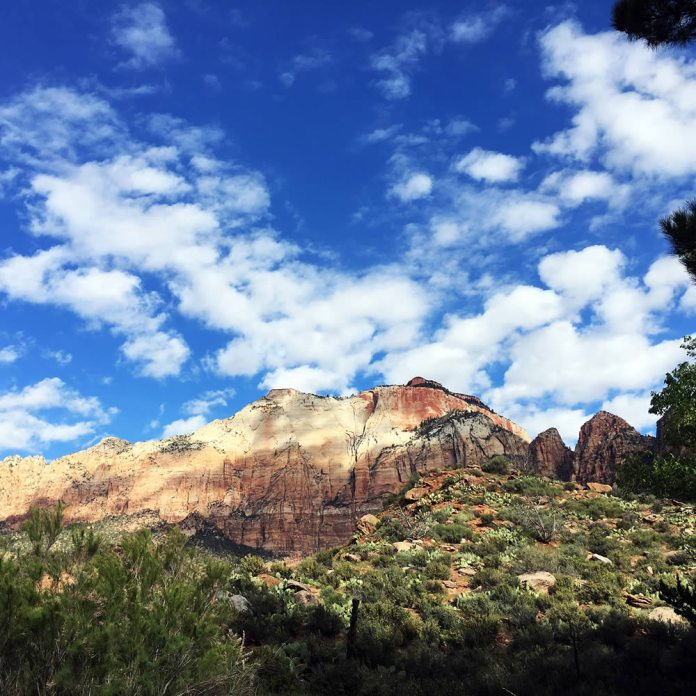 Zion National Park, Utah - Hasselblad 500 C-M, Kodak Portra 400