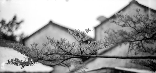 Out on a limb - Shot on Ultrafine Xtreme 400 at EI 400. Black and white negative film in 120 format shot as 6x12.