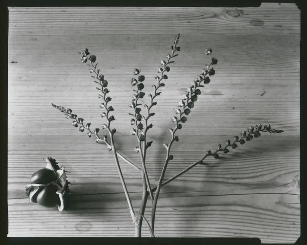 Nagaoka Seisakusho 4x5 - Seeds
