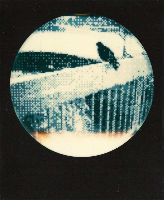 8-bit bird - Game Boy Camera photo on Impossible film, 2017