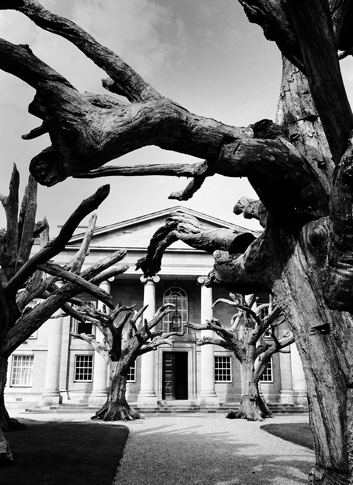 Ai Wei Wei, Cambridge - Leica M6, ILFORD HP5+ - This was taken in Cambridge University. I believe this was on the Medical Campus, with an installation of wooden trees by Ai WeiWei. I woke up at 6:30am and ran to the campus to take this shot... while it's still quiet.