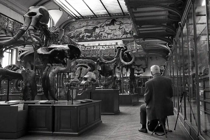 Muséum d'histoire Naturelle – Jardin des Plantes in Paris - Nikon F2, ILFORD XP2 Super