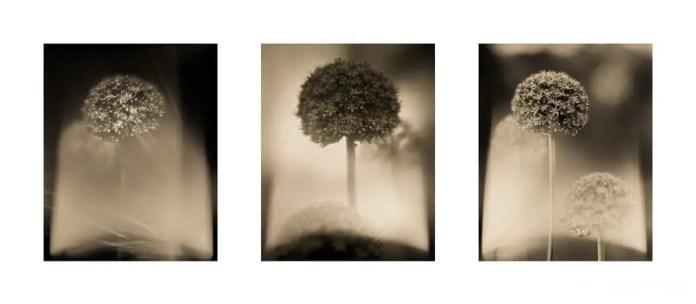 Isabel Curdes - Beyond the Veil 2017