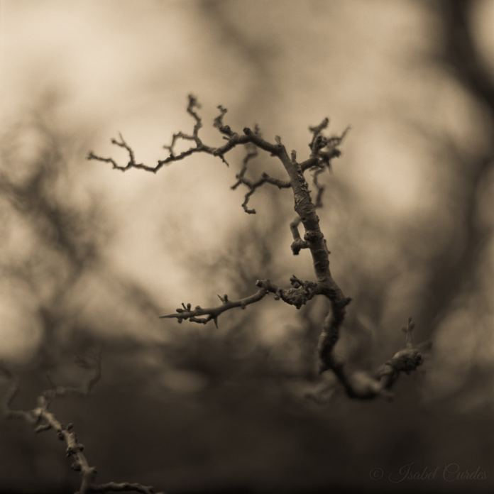 Isabel Curdes - Impish Mind 2017
