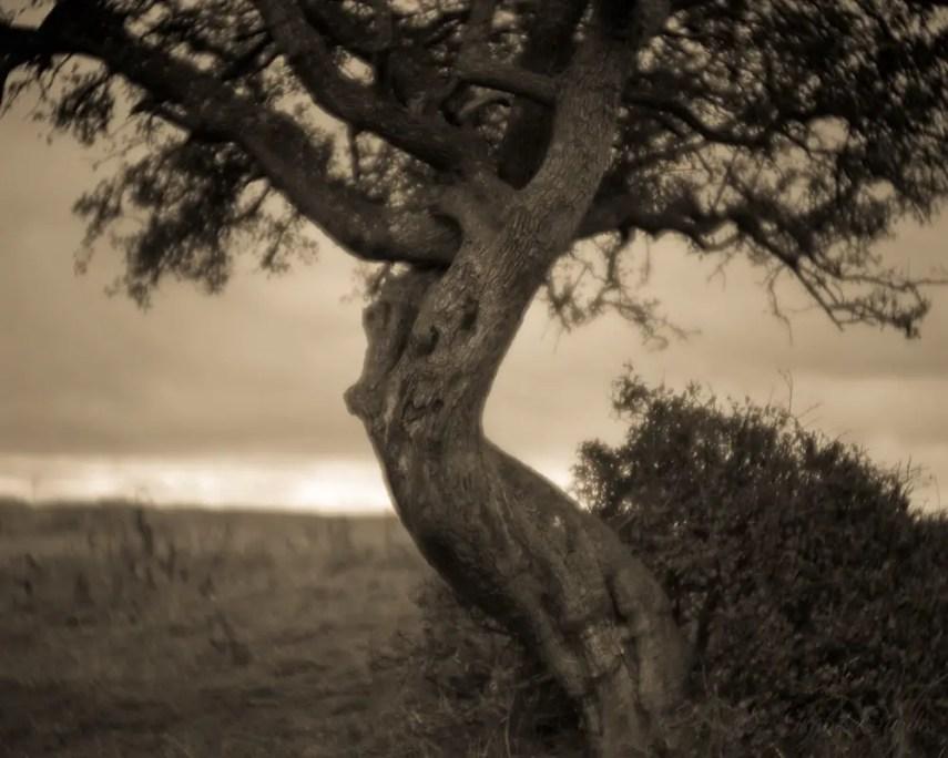 Isabel Curdes - The Awakening 2016