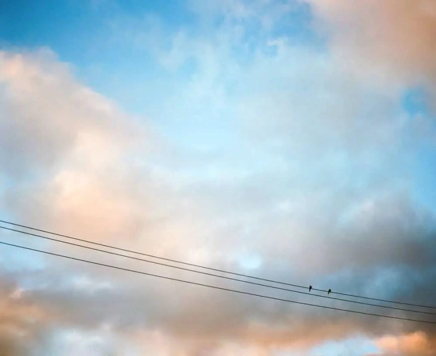 "Maite Pons - @PonsMaite ""What's a nice bird like you doing on a wire like this?"" @summerfilmparty #SummerFilmParty #pentax67ii #ektar100"