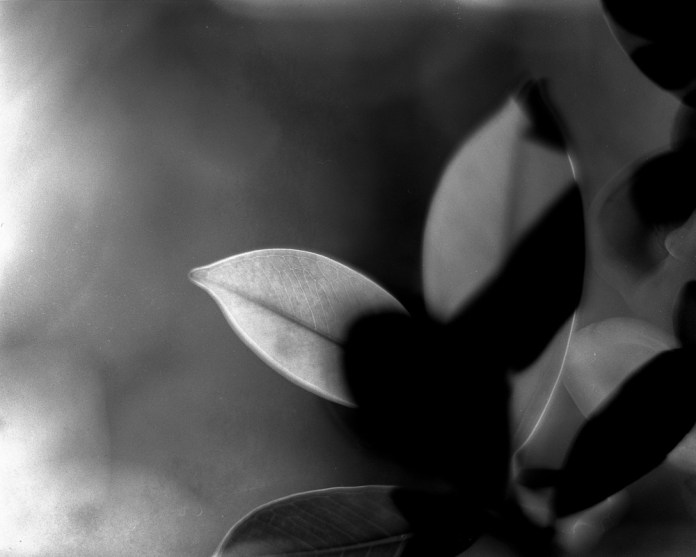 In vein - Fomapan 200 Creative shot at EI 200 - Black and white negative film in 4x5 format - AEROgraphic - Kodak Aero Ektar 178 f2.5 - Fomapan 200 Creative shot at EI 200 - Black and white negative film in 4x5 format - AEROgraphic - Kodak Aero Ektar 178 f2.5