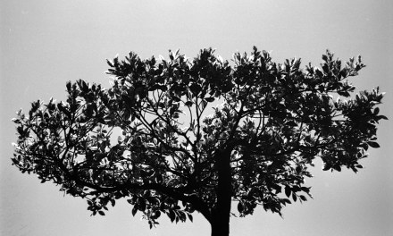 Tree of life – FILM Ferrania P30 Alpha (35mm)