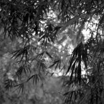Afloat - Shot on Bergger Pancro 400 at EI 200. Black and white negative film in 120 format shot as 6x6. Orange 21 filter, Hasselblad Planar F 80 F/2.8, Pyrocat-HD 1:2:100
