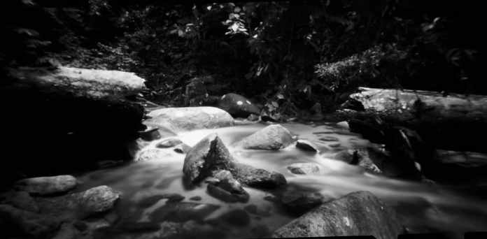 """""""Untitled"""", Berenbum rainforest, Malaysia. Noon 612 pinhole, 60mm, f256, loaded with Fuji Acros 100 exposed at EI 100, developed in Adox Rodinal 1:50."""