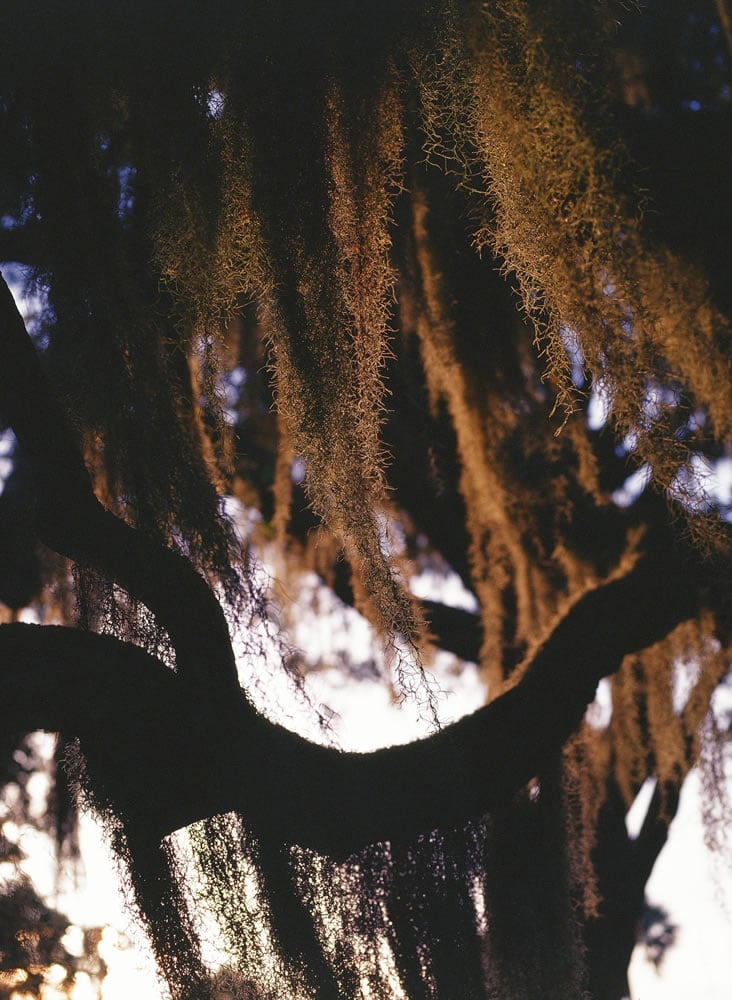 Spanish Moss on KODAK EKTACHROME 100VS