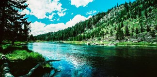 Madison river bend - Shot on Agfa Precisa CT 100 at EI 100. Color reversal (slide) film in 35mm format. Cross processed.