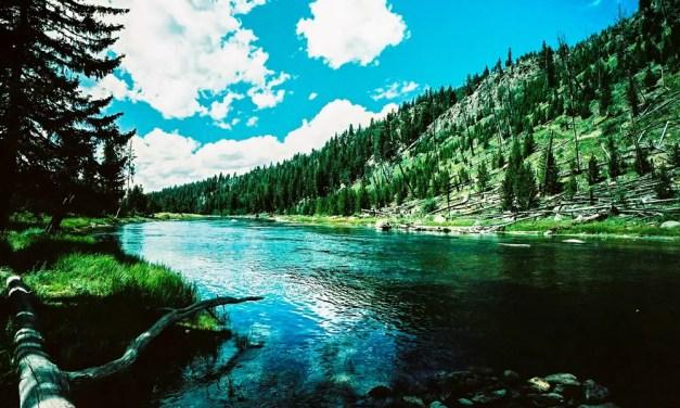 Madison river bend – Shot onAgfa Precisa CT 100 (35mm)