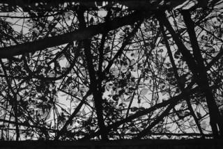 Translucent - Shot on FILM Ferrania FERRANIA P30 Alpha at EI 80. Black and white negative film in 35mm format. Reversal developed.