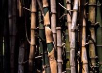 Photography: Bamboo grove #01 – Shot on Fuji Provia 100F RDP III at EI 100 (120 format)