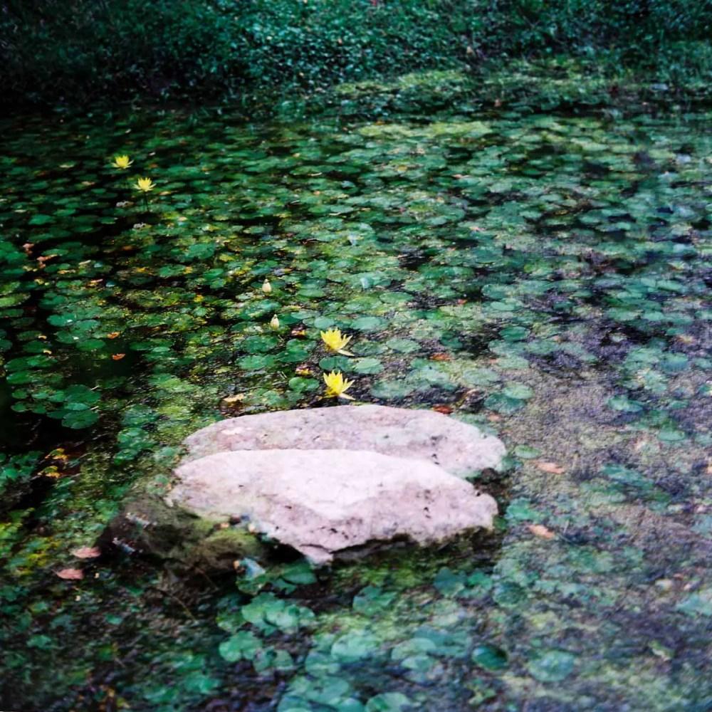 Rippled leaves - Shot on Kodak Ektar 100 at EI 200 - Color negative film in 120 format shot as 6x6 - Push processed one stop