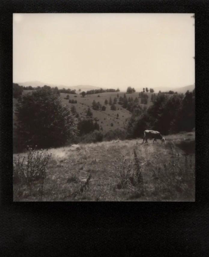 Polaroid AF Sun 660 camera, The Impossible Project B&W, black frame film (Wolfsberg/ Gărâna, Romania 2016).