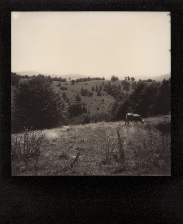 Polaroid AF Sun 660 camera, The Impossible Project B&W, black frame film (Wolfsberg/ Gărâna, Romania 2016).