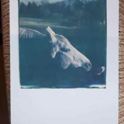Test 2: Emulsion lift on pre-fixed photo paper