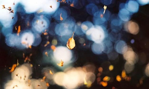 Shattered by light – Shot on Kodak Ektar 100 at EI 400 (format)