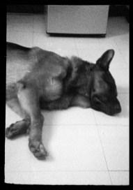 ORWO UN54 16mm film - Brutus