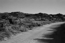 Road Bend - Kodak T-MAX 100 (0)