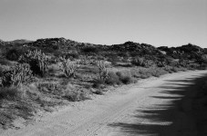 Road Bend - Kodak T-MAX 100 (-)